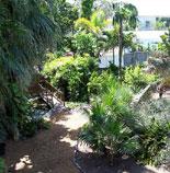 Hemingway's Gardens