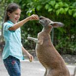 Kangaroos at Parrot Jungle!