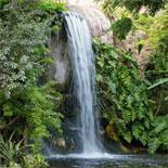 Jungle Island - Step Into A Lush Tropical Jungle