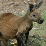 Kangaroos at Parrot Jungle!