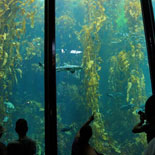 Monterey Bay Aquarium (additional cost for ticket)