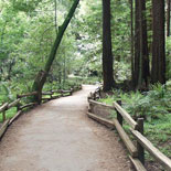 Up to 90 minutes in Muir Woods