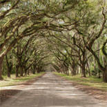 Historic and picturesque Isle of Hope Historic District