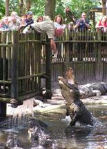 Shop with Alligator Farm Promo Code, Save with Valuecom.com
