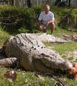 Alligator Maximo